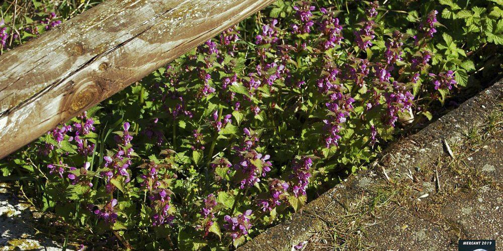 Blüten am Wegesrand