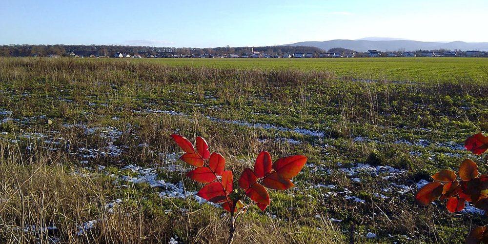 Frostige Feldmark