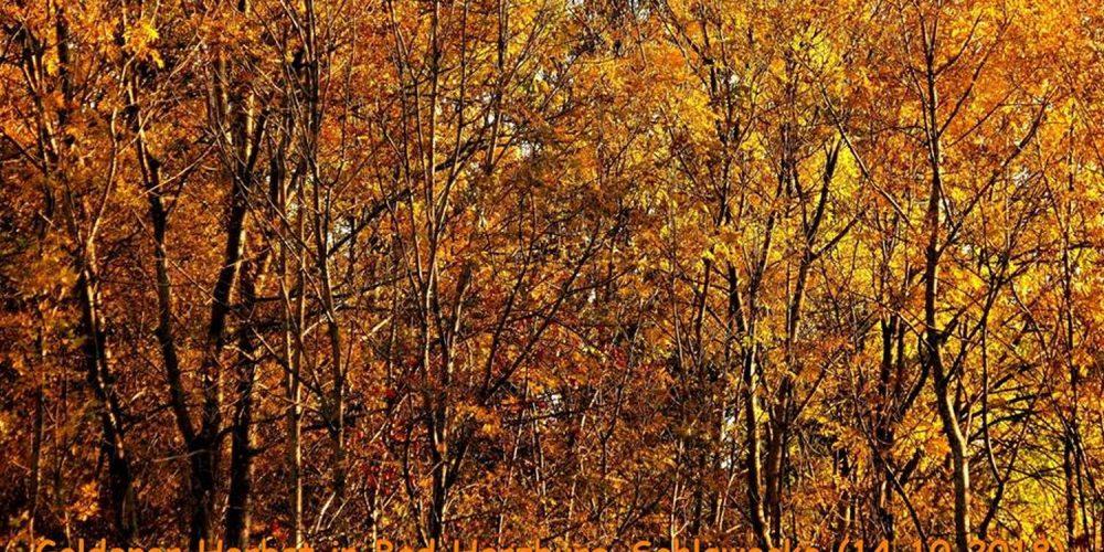 Goldener Herbst in Bad Harzburg