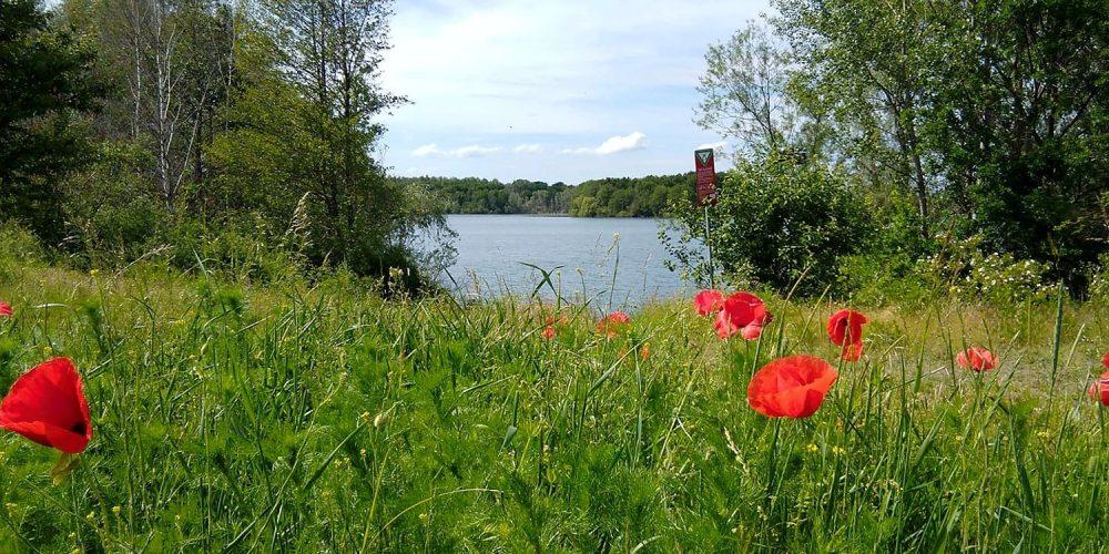 Wiedelaher See