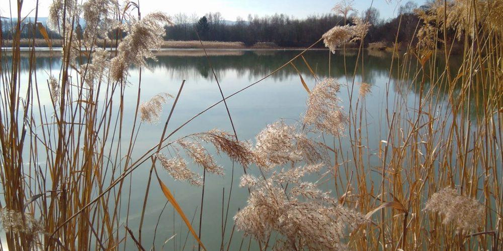 Am Vienenburger Teich