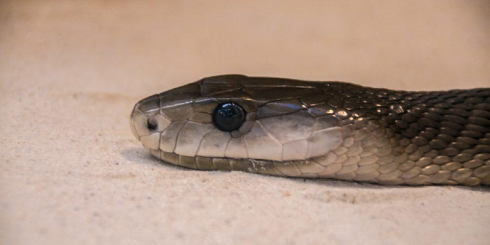 Schlangen, Echsen und Spinnen auf Europas größter, privater Schlangenfarm in Schladen