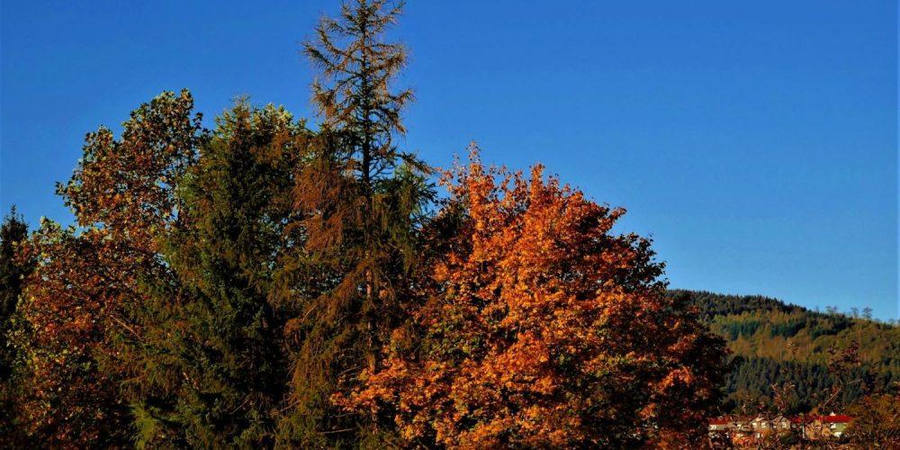 Herbststimmung in Göttingerode