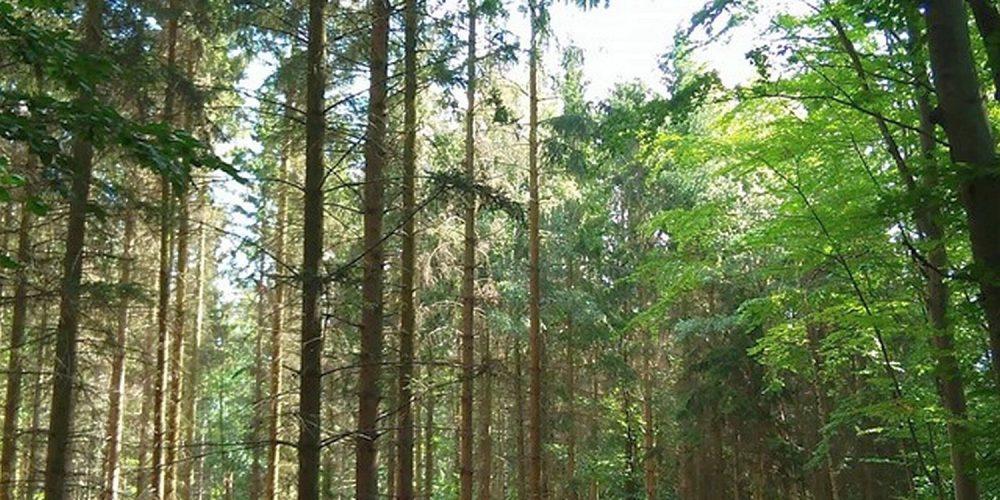 Harly Wald