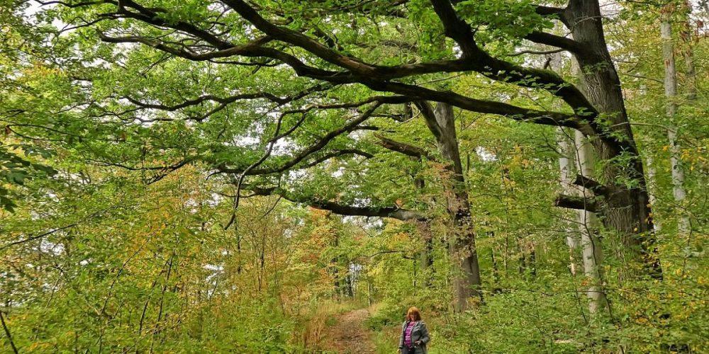 im Wöltingeroder Wald