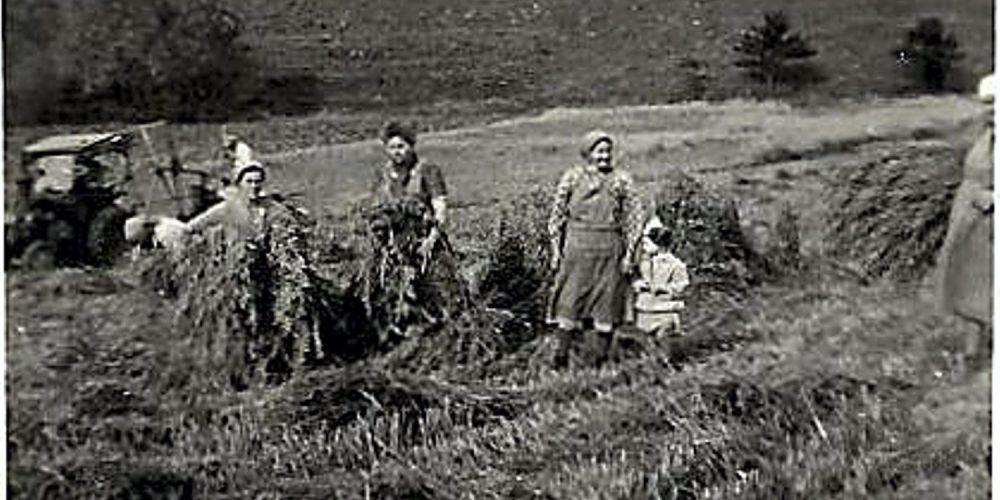 Feldarbeit in den 50ern bei Harlingerode