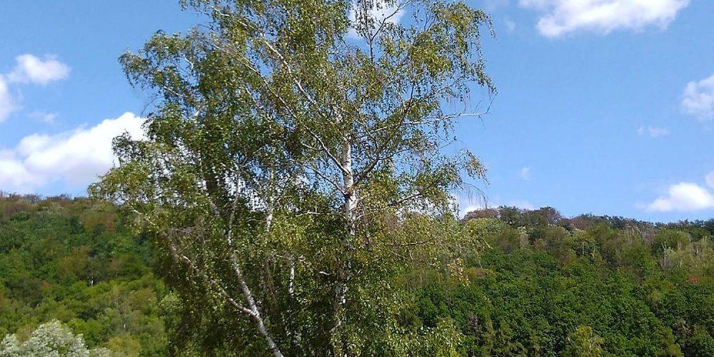 Okerwiese am Harlywald