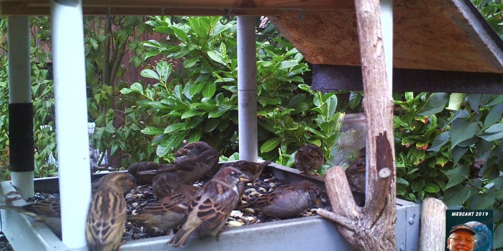 Vögel Schlewecke