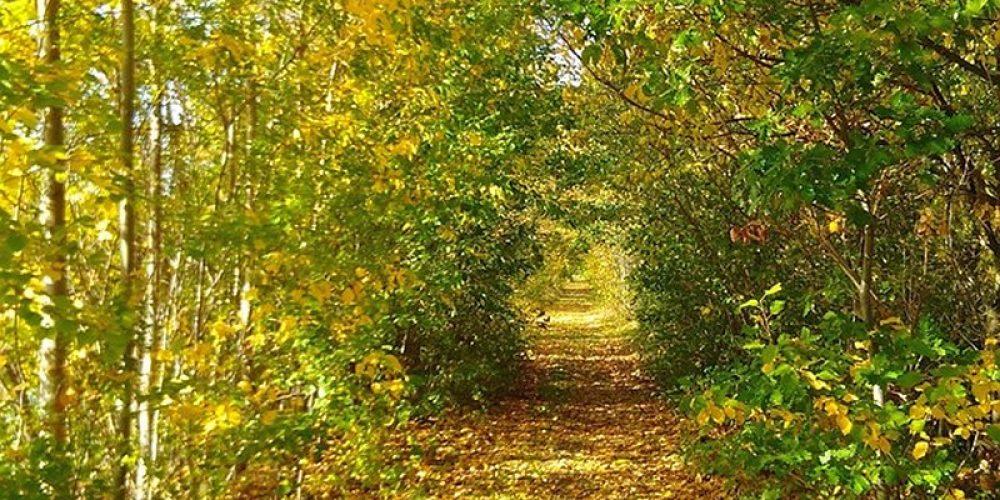 Herbststimmung am Vienenburger Teich
