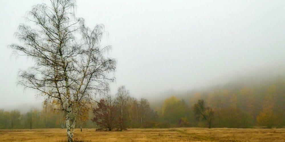 Okerwiese und Harlywald an einem Herbsttag