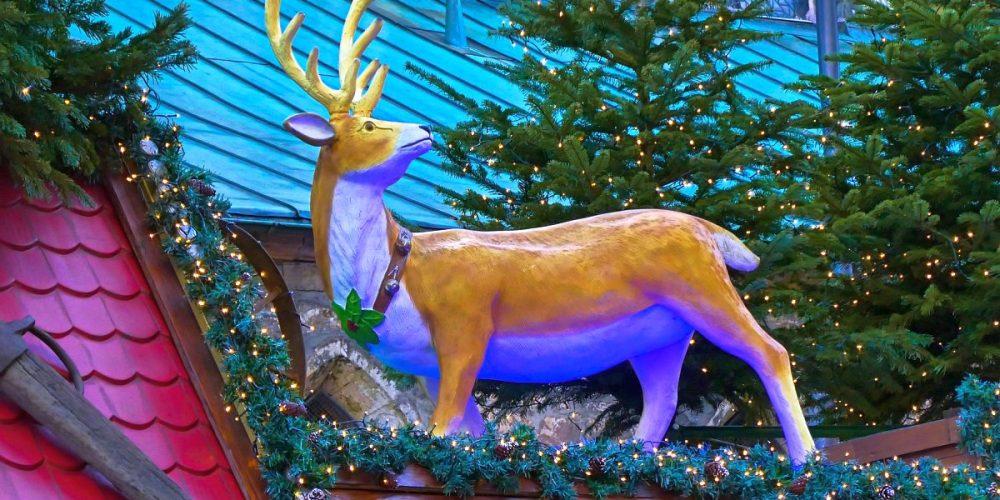 Rudolph Rednose am Weihnachtsmarkt