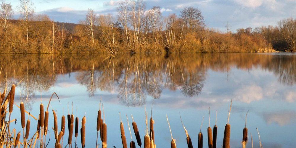 Vienenburger Teichlandschaft