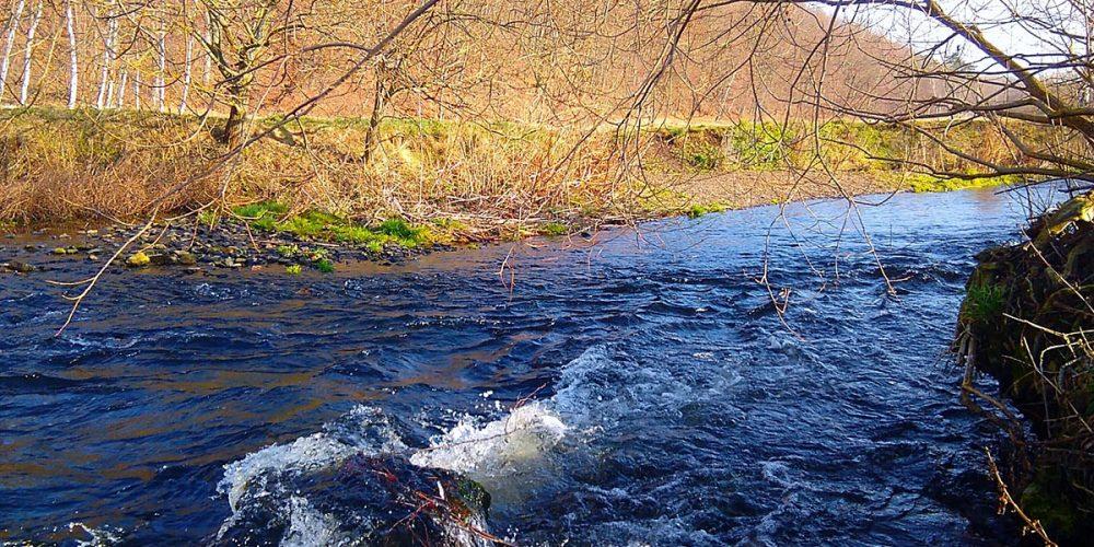 Okerfluss am Harlywald