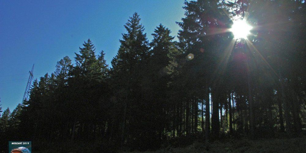 Wandern im Harz – Förster-Ludwig-Platz bei Altenau